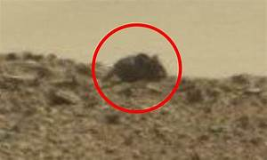 UFO hunters spot a 'MOUSE' on Mars in the latest images ...
