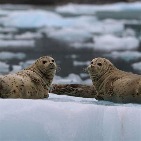lenses  wildlife photography explore camera lenses