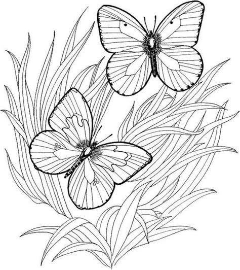 adult butterfly coloring pages  print atf