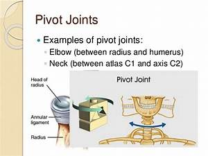 Examples Of Pivot Joints