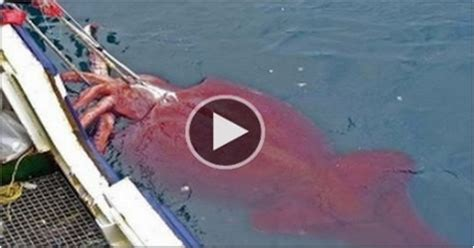 Giant Squid Attacks Fishing Boat by Fishing Videos Fishing Page 11