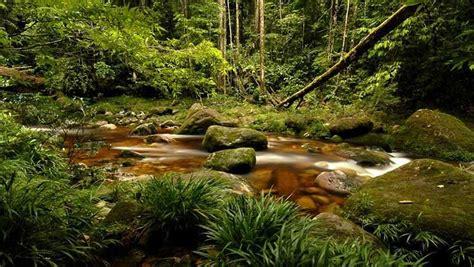 bedrohter artenreichtum amazonas greenpeace
