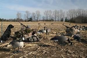 Central Ontario Goose Hunting