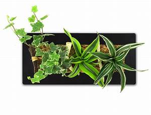 Tableau Végétal Mural : du vert au mur tableau v g tal petit coin de nature ~ Premium-room.com Idées de Décoration
