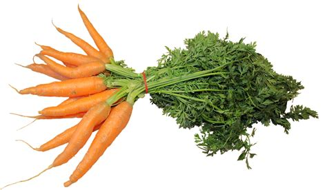 isolated federal carrots  photo  pixabay
