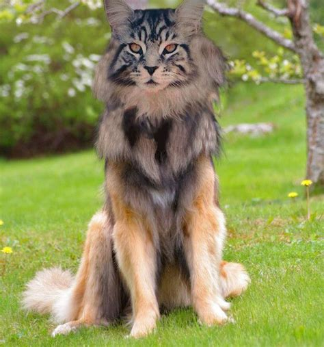 cat dog anyone? #hybrid #animal #weird | Hybrid Animals ...