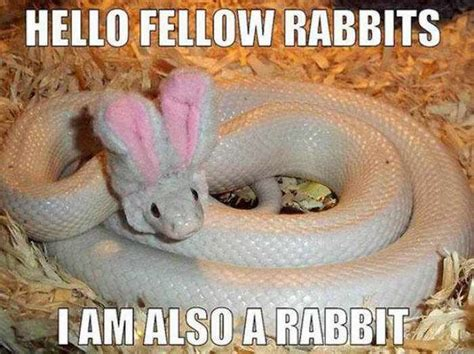 Hilarious Easter Memes - 17 best ideas about funny easter memes on pinterest funny weed pics funny easter quotes and