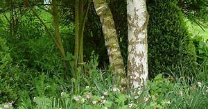 Pflanzen Für Trockene Schattige Standorte : stauden f r trockene schattige standorte mein sch ner garten ~ Michelbontemps.com Haus und Dekorationen