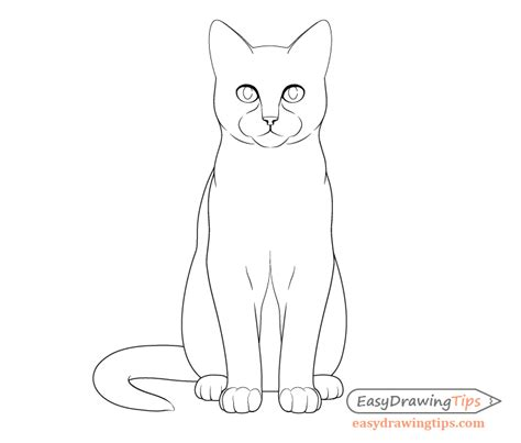 draw  cat step  step  front view