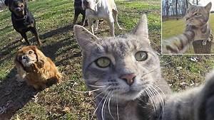 Kann Der Vermieter Katzen Verbieten : diese katze macht bessere selfies als du ~ Buech-reservation.com Haus und Dekorationen