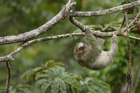 animals   amazon river basin