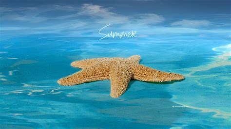 summer-season-hd-wallpapers-free-for-desktop-downloaded