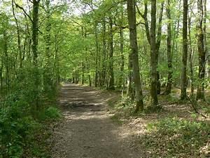 Foret à Bois : promenons nous dans les bois ~ Nature-et-papiers.com Idées de Décoration
