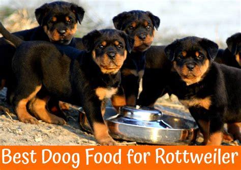 choose   dog food  rottweiler  bones