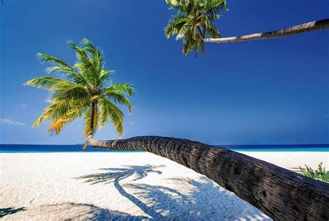 chambre pour homme poster grand format palmier en trompe l 39 oeil paysage océan