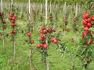 Wann Apfelbaum Pflanzen : apfelbaum vermehren diese methoden gibt es ~ Lizthompson.info Haus und Dekorationen
