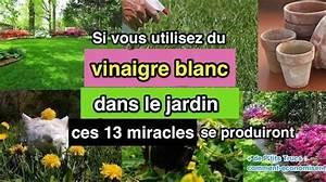 Vinaigre Blanc 14 Desherbant : si vous utilisez du vinaigre blanc dans le jardin ces 13 miracles se produiront ~ Melissatoandfro.com Idées de Décoration