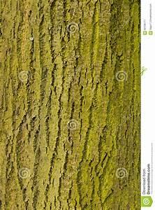 Achat Tronc Arbre Decoratif : tronc d 39 arbre avec de la mousse ou le lichen escroc ~ Zukunftsfamilie.com Idées de Décoration