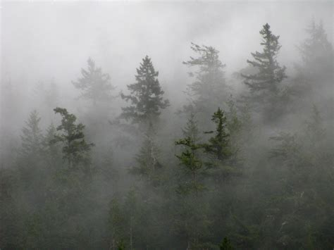 meaning  symbolism   word mist