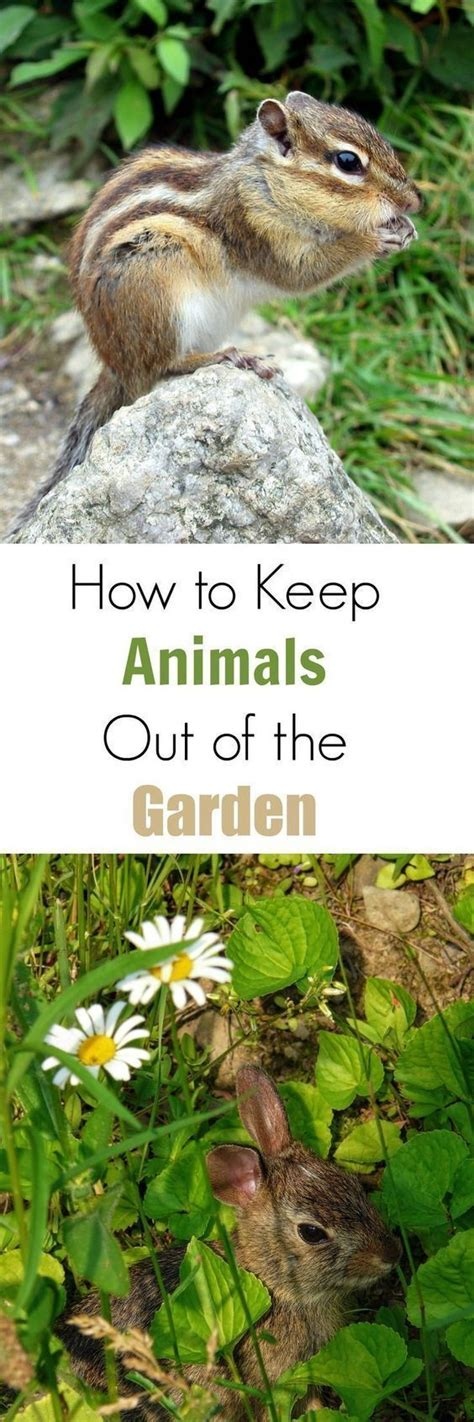 Keep Animals Out Of Garden by 4919 Best Gardening Tips Inspiration Images On