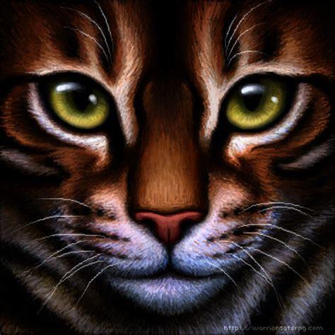 warrior cat tiger and warrior cat quotes quotesgram