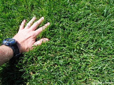 4 Grass Types For Lawns In Columbus, Oh