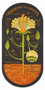 Anatomy Of A Mushroom  A Flower And A Cactus