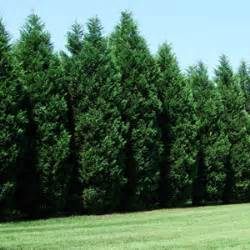 carolina trees for sale fast growing trees