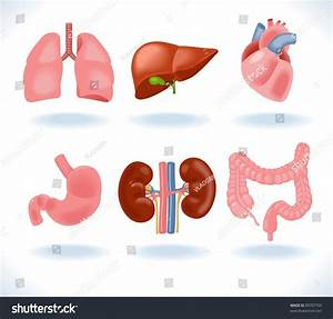Set Human Anatomy Parts Liver Heart Stock Vector 89707759