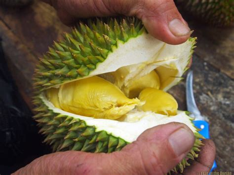 tips  travel  eat loads  durian   small budget