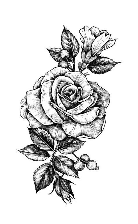 rose+low+res.jpg (491×800) | Rose drawing tattoo, Rose tattoos, Rose drawing