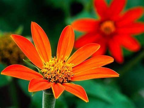 Of The Gods Flowers by God S Beautiful Orange Flowers God The Creator Photo