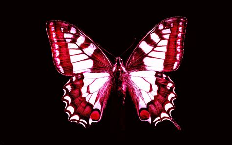 red butterfly wallpaper gallery