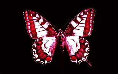 Butterfly Desktop Phone Screen Resolution