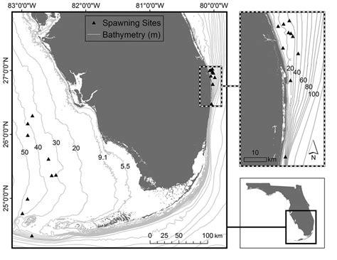 goliath grouper epinephelus itajara atlantic confirmed map spawning florida panel southwest southeast left