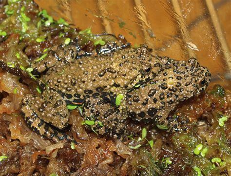 frog shedding or sick 100 frog shedding best diy