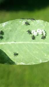 Käfer Im Garten : was sind das f r k fer l use garten baum kaefer ~ Lizthompson.info Haus und Dekorationen