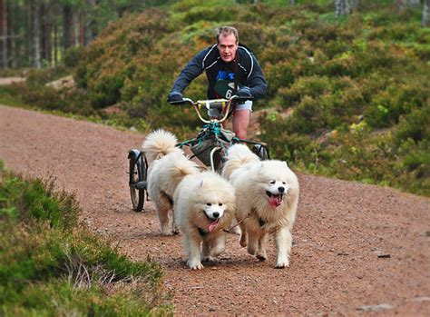 Karen Brodie Photography Dog Sled Race At Aviemore