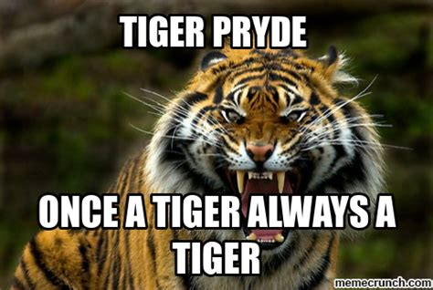 Terrible Tiger Meme - tiger meme 28 images terrible tiger memes tiger fever tiger meme work pinterest tigers and