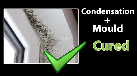 easy   stop condensation  rid  black mold