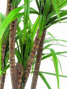 Yucca Palme Garten : yucca palme naturst mme 150cm palme kunstpalme dekopalme ~ Lizthompson.info Haus und Dekorationen