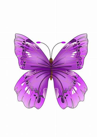 Butterfly Purple Clip Clipart Vector Butterflies Cartoon