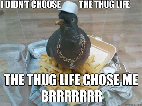 Pigeon Memes - socially awesome pigeon memes quickmeme