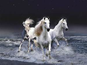 Beautiful White Horses Wallpaper 1280x960