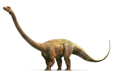 Barosaurus Facts Largest Dinosaur Dk Find Out