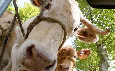 chambre agriculture 66 infographie les chiffres de l élevage dans le lot et