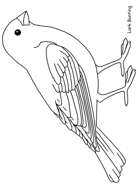 template bird coloring pages bird template bird drawings
