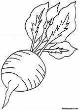 Coloring Radish Vegetables Pages Vegetable Printable Colouring Root Lettuce Fruit Turnip Drawings Fastseoguru Sheets Preschool Picolour Line Garden Farm Realistic sketch template