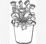 Venus Flytrap Drawing Plant Trapping Coloring sketch template