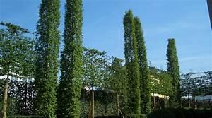 Grüner Sichtschutz Garten : gr ner sichtschutz moderner sichtschutz im garten ~ Markanthonyermac.com Haus und Dekorationen